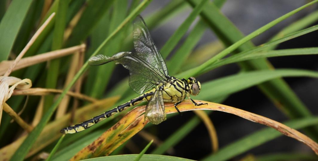 Mislukte uitsluiping door beschadiging van vleugels